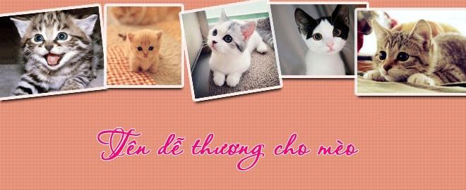 Tổng hợp các tên hay dành cho mèo của bạn