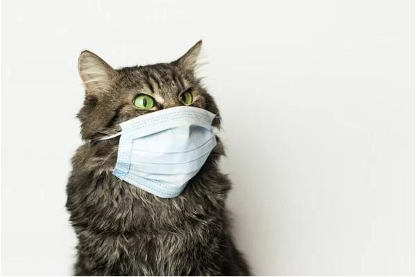 Cách phòng tránh sổ mũi ở mèo