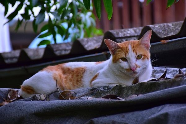 Mèo vào nhà là điềm gì? Tốt hay xấu, hên hay xui?