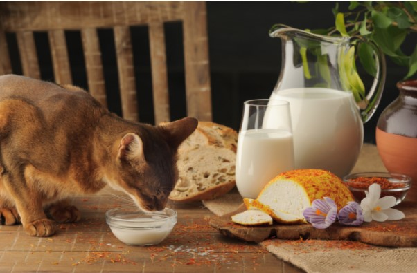 Sữa Bio cho mèo